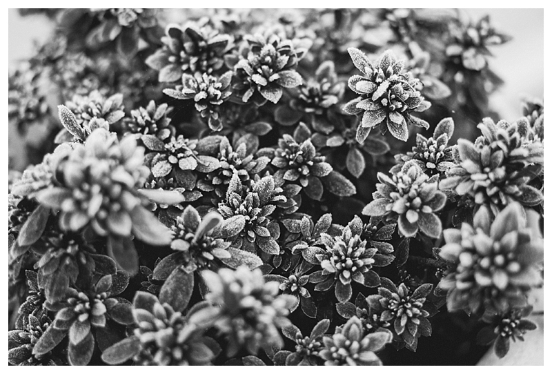 Marie-Alice G-Photographe Mariage Manche - Cherbourg Valognes Saint Lo Bayeux Caen - Photographe Nature - Jardin Gele